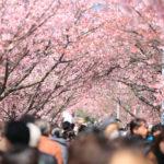 海外でも知られている有名な日本語。いいやつもあり、不名誉なやつもあり。